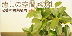 癒しの空間を演出  定番の観葉植物