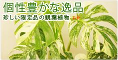 個性豊かな逸品 珍しい限定品の観葉植物