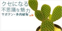 クセになる不思議な魅力 サボテン・多肉植物