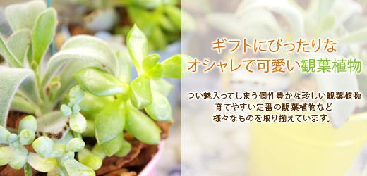ギフトにぴったりなオシャレで可愛い観葉植物